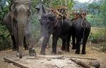 Karen-Dorf: Reitelefanten - Doi Inthanon-Nationalpark