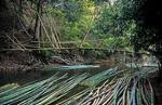 Bambus-Brücke über den Fluß - Doi Inthanon-Nationalpark