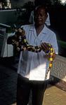 Schlangenfarm (Queen Saowapha Memorial Institute): Gebänderter Krait (Bungarus fasciatus) - Bangkok