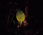 Mai's Quite Zone: Beleuchtetes Blatt - Khao Lak