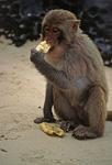 Monkey Island: Affe - Halong Bay