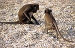 Monkey Island - Halong Bay