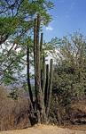 Kaktus - Monte Albán