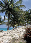Palmen am Karibischen Meer - Tulum