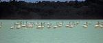 Flamingos (Phoenicopterus ruber) - Reserva de la Biósfera Ría Celestún