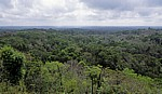 Blick von Tempel IV: Dschungel - Tikal