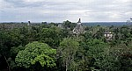 Blick vom Tempel V: Blick in Richtung Große Plaza mit den Spitzen der Tempel II (links) und I - Tikal