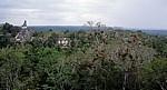 Blick vom Tempel V: Tempel I - Tikal