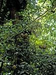 Früchte eines Baumes - Yaxchilán