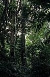 Dschungel - Palenque