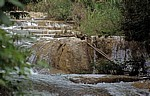 Reserva Biósfera Cascadas Agua Azul: Vogel an den Cascadas - Agua Azul