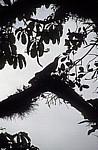 Reserva Biósfera Cascadas Agua Azul: Vogel zwischen Tillandsien - Agua Azul