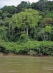 Ufervegetation - Rio Usumacinta