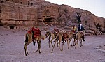 Äußerer Sik: Kleine Karawane - Petra