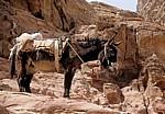 Esel - Petra