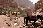 Eselparkplatz - Petra
