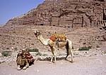 Kamele vor der Königswand - Petra
