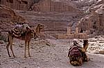 Kamele vor dem Theater - Petra