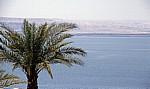 Palme am Meer - Totes Meer