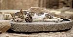 Festung: Katze - Aqaba