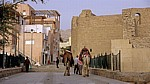 Kamele vor der Festung - Aqaba