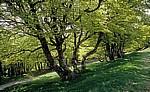 Jakobsweg (Navarrischer Weg): Wald - Pyrenäen