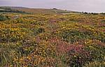 Landschaft - Dartmoor National Park (Devon)