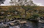 Landschaft - Exmoor