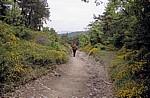 Jakobsweg (Navarrischer Weg)  - Pyrenäen
