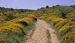 Jakobsweg (Navarrischer Weg): Ginster - Sierra del Perdón