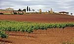 Jakobsweg (Camino Francés): Felder auf dem Weg nach Cirauqui  - Navarra