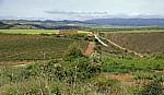 Jakobsweg (Camino Francés): Landschaft zwischen Cirauqui und Lorca - Navarra