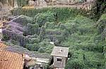 Ackerwinden (Convolvulus arvensis) überwuchern Teile der Altstadt - Porto