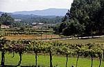 Jakobsweg (Caminho Português): Landschaft - Distrito de Braga