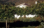 Casa de Fernanda - Lugar do Corgo