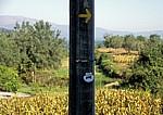 Jakobsweg (Caminho Português): Jakobsmuschel und gelber Pfeil zeigen den Weg - Albergaria
