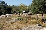Jakobsweg (Caminho Português): Alto Portela Grande (435 m über NN)  - Portela Grande