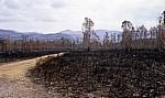 Jakobsweg (Caminho Português): Verbrannte Gegend - Distrito de Viana do Castelo