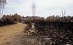 Jakobsweg (Caminho Português): Gelber Pfeil zwischen verbrannten Büschen - Distrito de Viana do Castelo
