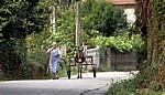 Jakobsweg (Caminho Português): Alte Frau mit Eselskarren - Pontevedra