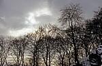 Laubbäume im Winter - Porta Westfalica