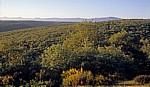 Jakobsweg (Camino Francés): Ausblick von den Montes de Oca auf die Sierra de la Demanda - Castilla y León