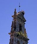 Iglesia de Agés: Weißstorch (Ciconia ciconia) auf dem Kirchturm - Agés