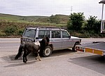 Hinter einem Auto herlaufendes Pony - Tardajos