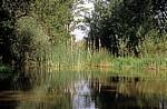 Jakobsweg (Camino Francés): Am Ufer des Río Ucieza - Población de Campos