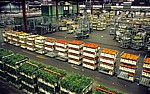 FloraHolland: Vertriebshalle - Aalsmeer