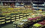 FloraHolland: Vertriebshalle – mit Blumen gef?llte Stapelwagen - Aalsmeer