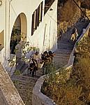 Treppenweg zum alten Hafen: Eselstreiber mit ihren Eseln - Fira