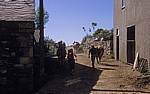 Jakobsweg (Camino Francés): Pilger und Kühe teilen sich den Weg - Biduedo