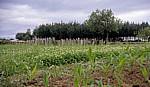 Jakobsweg (Camino Francés): Landwirtschaftliche Fläche - Mercadoiro